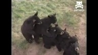 Bear love train