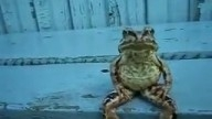A Frog Sitting on a Bench Like a Human