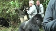Crazy Gorilla Attack