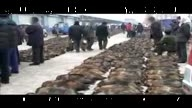 China killing industry